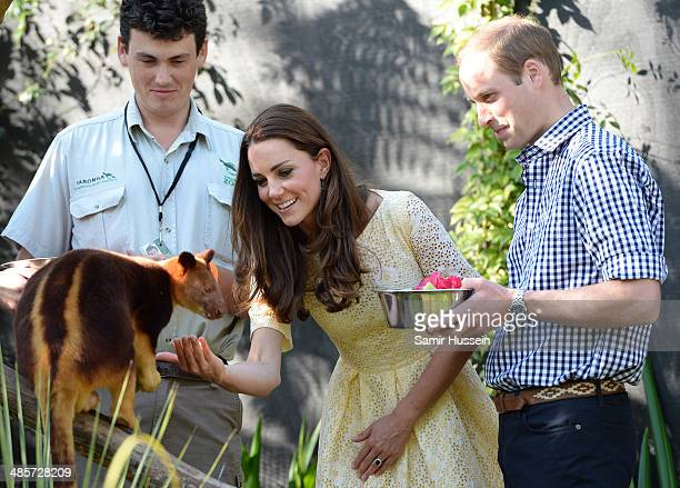 Prince William Duke of Cambridge and Catherine Duchess of Cambridge feed a tree kangaroo as they isit the Bilby Enclosure at Taronga Zoo on April 20...