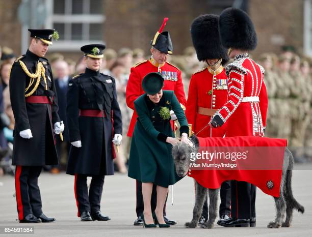 Prince William Duke of Cambridge looks on as Catherine Duchess of Cambridge presents a shamrock to Irish Wolfhound 'Domhnall' as she attends the...