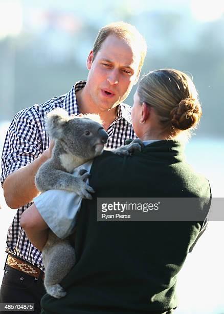 Prince William Duke of Cambridge meets a Koala at Taronga Zoo on April 20 2014 in Sydney Australia The Duke and Duchess of Cambridge are on a...