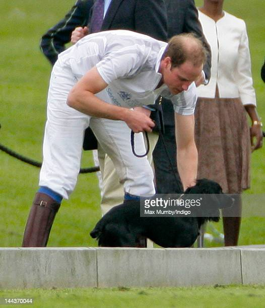 Prince William Duke of Cambridge with his dog Lupo after playing along with Prince Harry in the Audi Polo Challenge charity polo match at Coworth...
