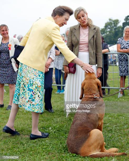Princess Anne, Princess Royal and Sophie, Countess of Wessex meet a bloodhound as they visit the Westmorland County Show on September 9, 2021 in...