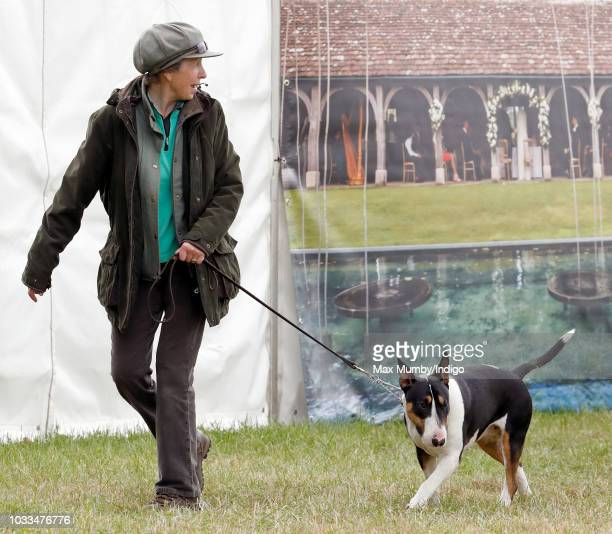 Princess Anne, Princess Royal takes her bull terrier dog for a walk as she attends the Whatley Manor Horse Trials at Gatcombe Park on September 8,...