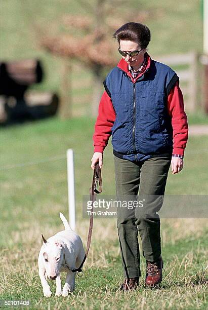 Princess Anne Walking Her Pet Bull Terrier Dog At Gatcombe Park Horse Trials Gloucestershire