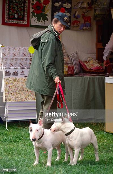 Princess Anne Walking Two Of Her Bull Terrier Dogs At The British Horse Trials Championships At Gatcombe Park In Gloucestershire. The Princess Is...