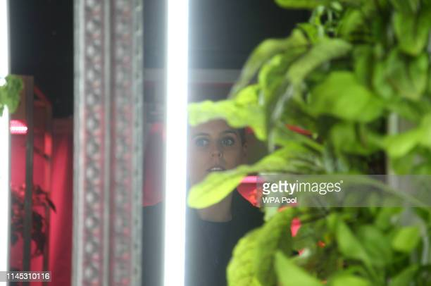 Princess Beatrice of York visiting the IKEA and Tom Dixon Gardening Will Save The World Garden at the RHS Chelsea Flower Show 2019 press day at...