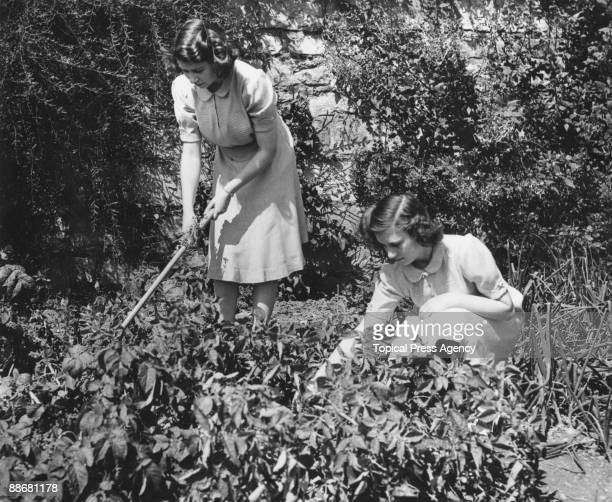 Princess Elizabeth and her younger sister Princess Margaret Rose working on their allotment in the grounds of Windsor Castle 11th August 1943 They...