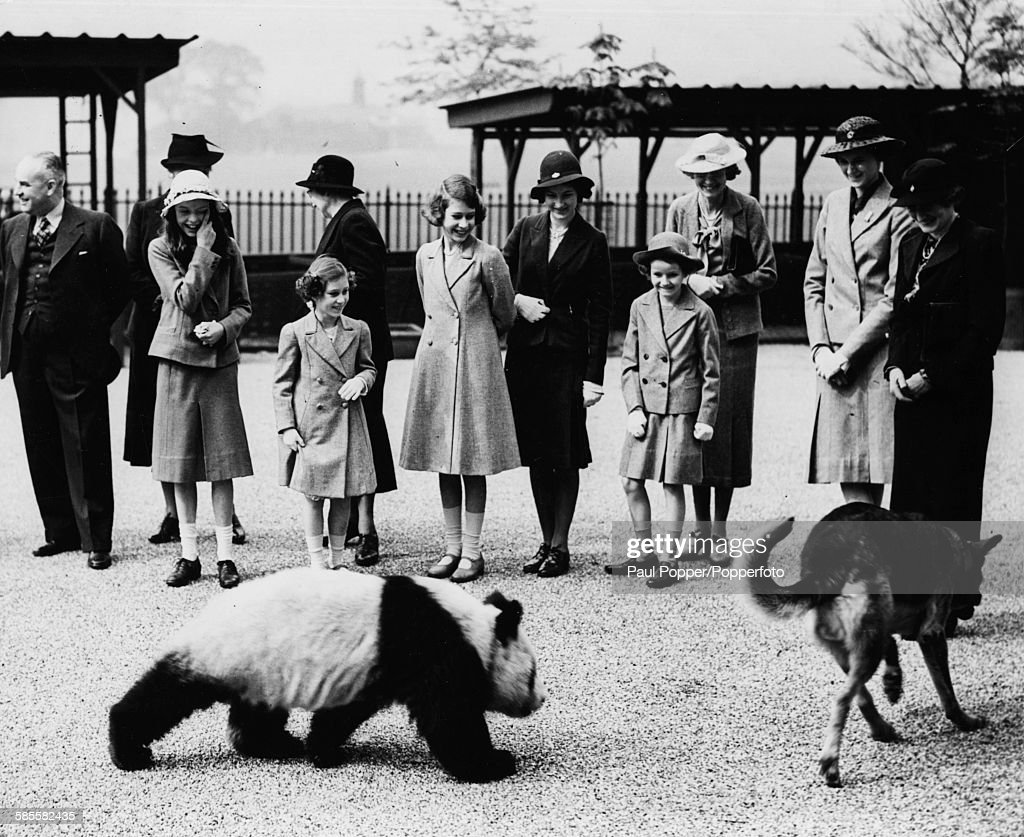 Princess Elizabeth (centre) and Princess Margaret (second left) laugh as they watch a Giant Panda chase an Alsation dog at London Zoo, May 10th 1939.