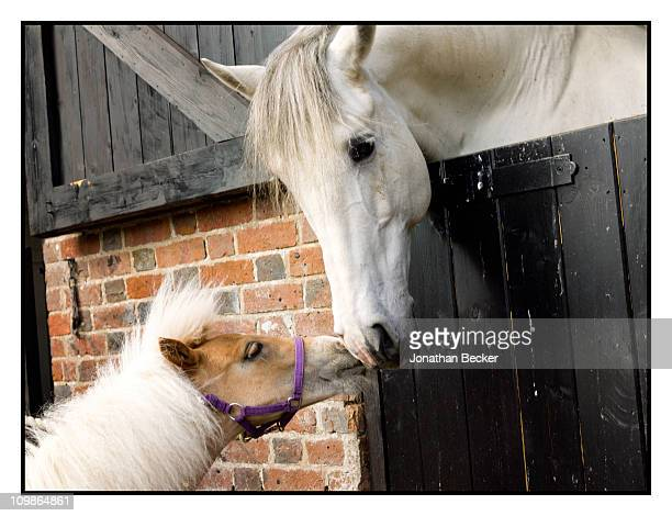 Princess MarieChantal's horses at her home 'Beale House' are photographed for Vanity Fair Spain on May 23 2009 in West Sussex England Published image