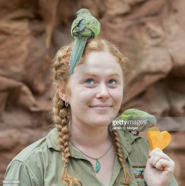 Princess parrots enjoy a heart shaped pumpkin enrichment treat served by keeper Laura Howell at Wild Life Sydney Zoo on February 14 2017 in Sydney...