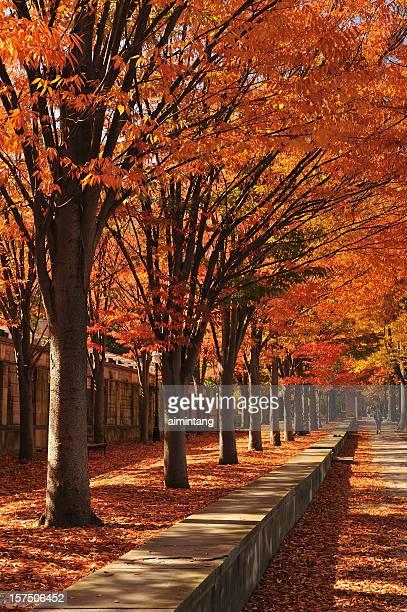 プリンストン - ニュージャージー州 プリンストン ストックフォトと画像