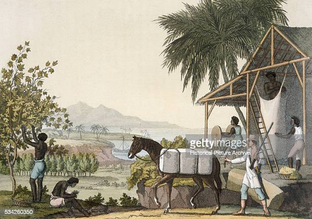 A print by Fumagalli of a painting of slaves at work in a cotton plantation