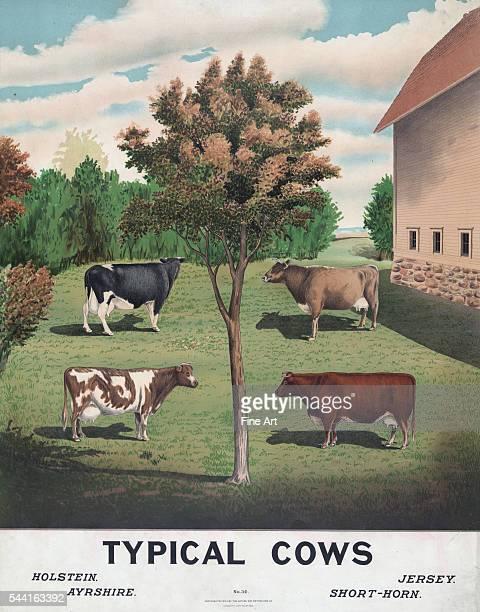 Print from circa 1904