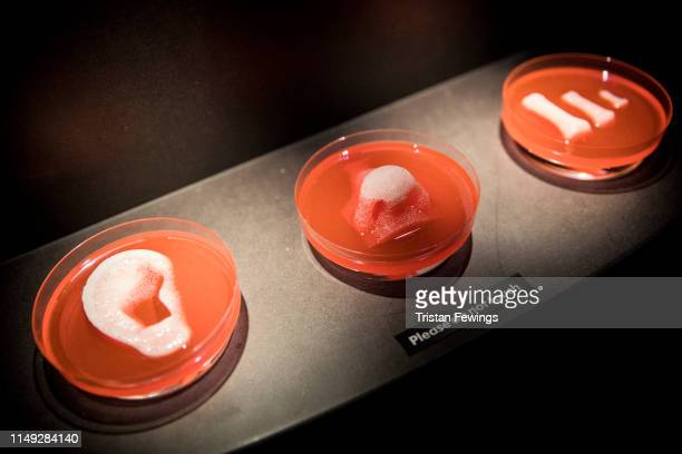 3D printed organ scaffolds by Wake Forest Institute for Regenerative Medicine is displayed as part of the 'AI More than Human' exhibition at the...
