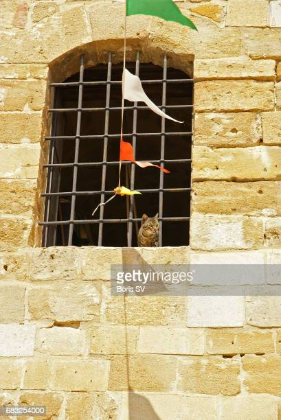 Prisoner Cat