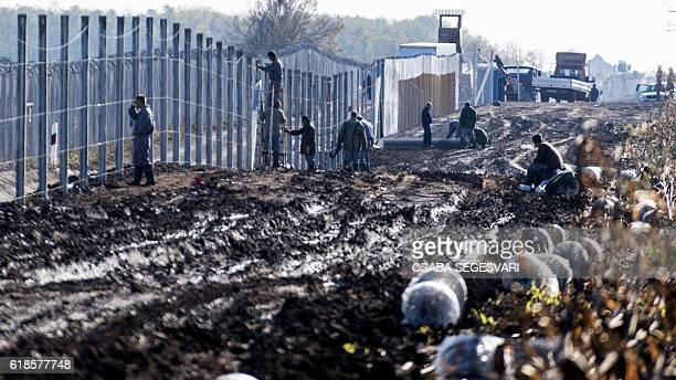 TOPSHOT Prisoners build a new second fence at the HungarianSerbian border near Gara village on October 27 2016 as part of its efforts to keep...