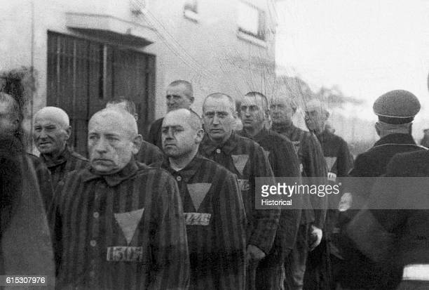 Homosexual prisoners at the concentration camp at Sachsenhausen Germany wearing pink triangles on their uniforms are marched outdoors by Nazi guards...