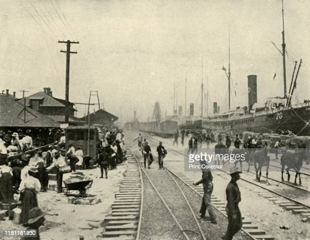 Prisoners Released', Spanish-American War, June 1898, . Troopships at Port Tampa, Florida, USA, preparing to leave for Cuba. 'The mules and horses...