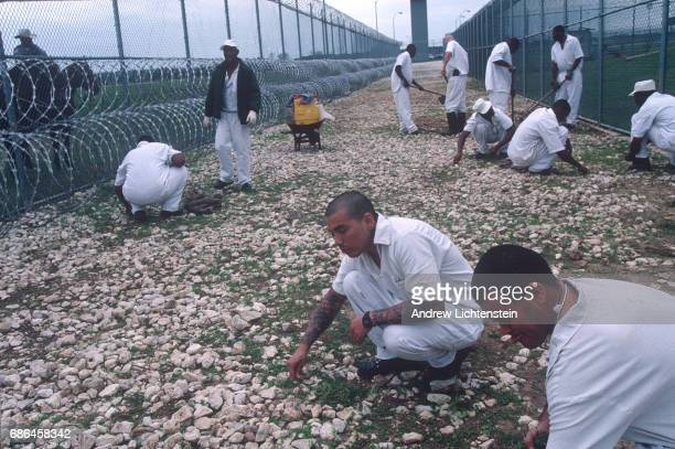 Prisoners work the fields of the the Texas Department of Criminal Justice's Ferguson Unit on January 15 1995 along the Trinity River in Madison...
