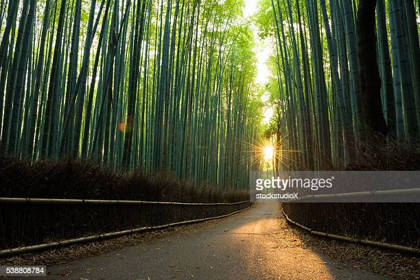 pristine bamboo forest at sunrise - kyoto prefecture stock pictures, royalty-free photos & images