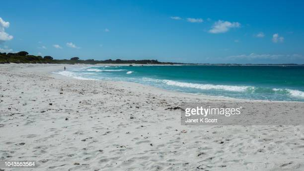 pristine beach in mount william national park, tasmania - janet scott stock pictures, royalty-free photos & images