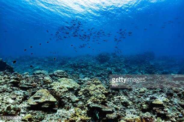 pristine coral reef, breathtaking view in fish paradise, peleliu island, palau, micronesia - reef stock pictures, royalty-free photos & images
