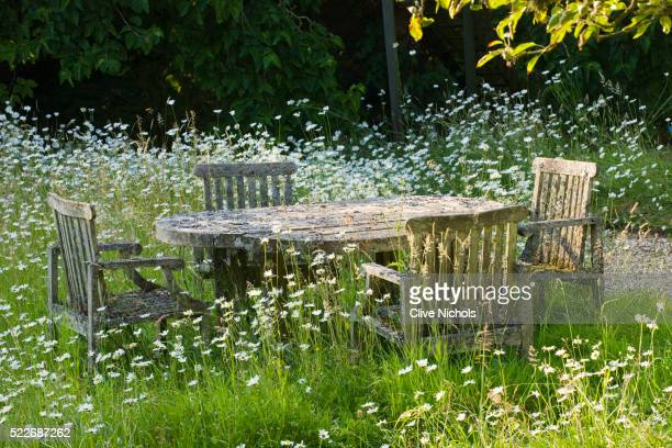 private garden in the cotswolds - wildflower stock pictures, royalty-free photos & images