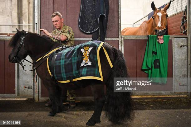 Private Peter Higgins brushes official mascot of Balaclava Company 5th Battalion The Royal Regiment of Scotland Cruachan the Shetland pony as they...