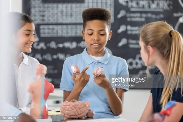 Private STEM middle school boy examines human brain model