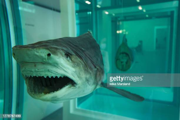 """Private view of """"End Of A Century"""" by Damien Hirst at Newport Street Gallery on October 06, 2020 in London, England."""