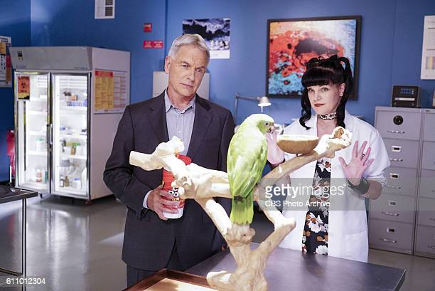 Privileged Information When the NCIS team investigates a marine sergeant's tragic fall from a building her doctor Grace Confalone confides in Gibbs...