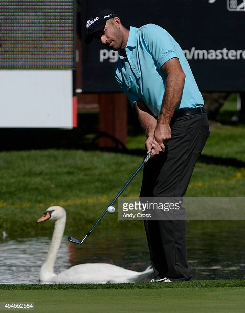 Pro golfer Geoff Ogilvy chips up onto the green as a swan floats around the moat during the FedExCup BMW Championship ProAm at the Cherry Hills...