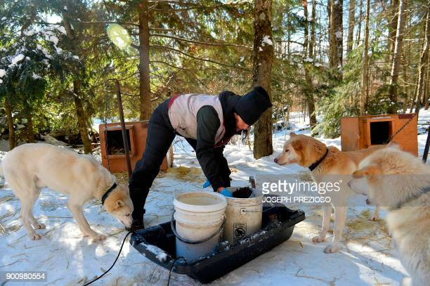 Pro musher Marla Brodsky feeds her team of Alaskan Husky sled dogs in 9degree Fahrenheit weather at her kennel behind her house on January 3 2018 in...
