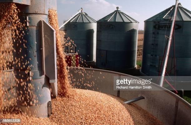 Processing Corn in Corn Dryer