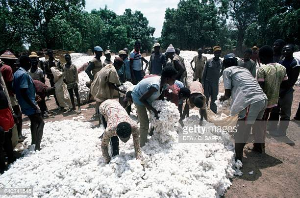 Processing newlyharvested cotton Burkina Faso