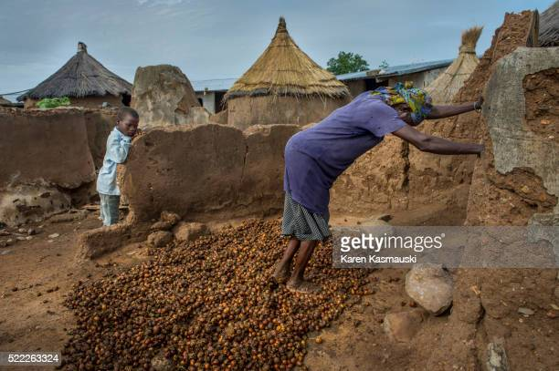Processing Shea Nuts in Ghana
