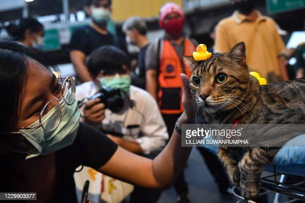 Pro-democracy protester pets a cat with a small yellow rubber duck toy on its head during an anti-government rally at Lat Phrao intersection in...