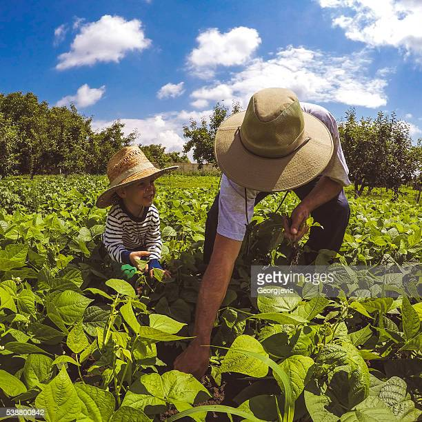 Producing excellent crops