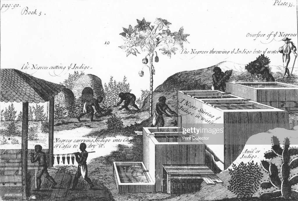 Producing indigo dye with slave labour: West Indies or Central America, 1725. Artist: Anon : News Photo
