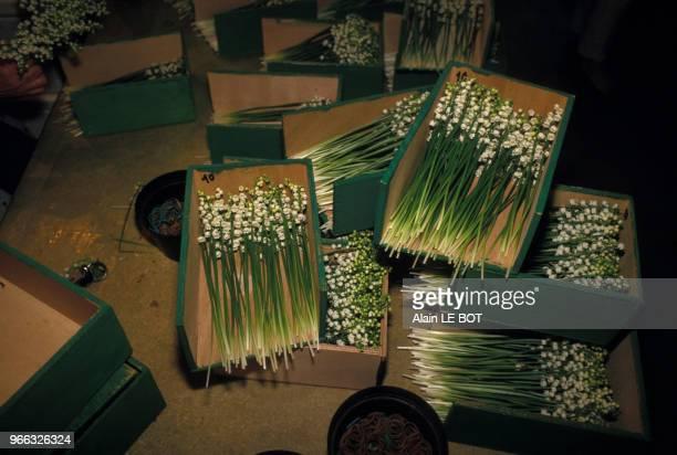 Production de muguet à Nantes, le 25 avril 1987, en Loire-Atlantique, France.