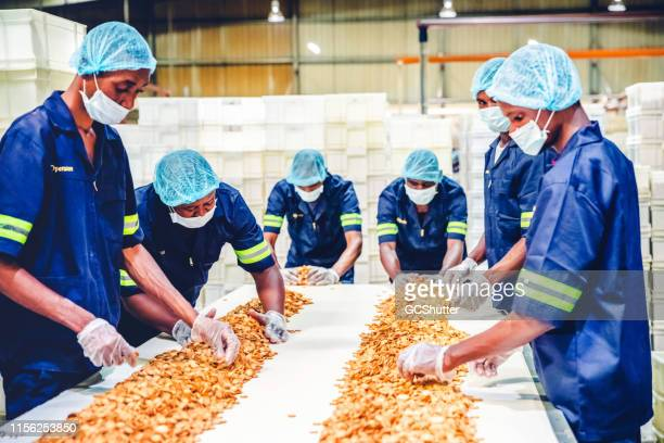 Production Line Worker Checking the Freshly Baked Biscuits on the Conveyor Belt