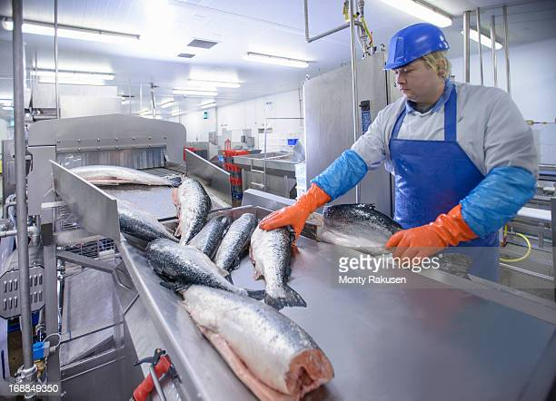 Production line worker filleting salmon in food factory