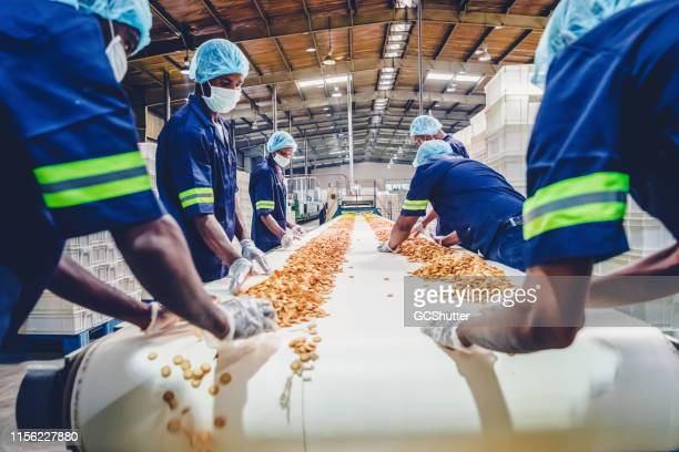 production line workers collecting freshly baked biscuits from the conveyor belt - africa stock pictures, royalty-free photos & images