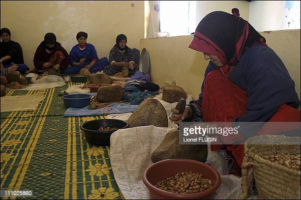 Production of argan oil in the Essaouira area of Morocco Argan tree fruit is cut open to extract the almond which will be torrefied and crushed in...