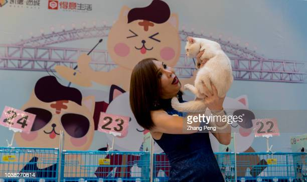 A professional appraiser is evaluating a purebred cat on the stage A purebred cat awarding competition is held in a shopping mall More and more...