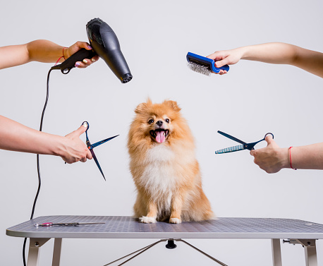 Professional cares for a dog in a specialized salon. Groomers holding tools at the hands. 1068118124