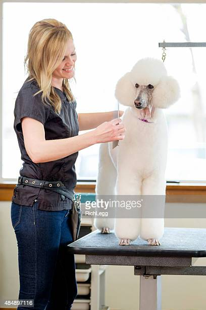 Professional Dog Groomer in a Pet Salon