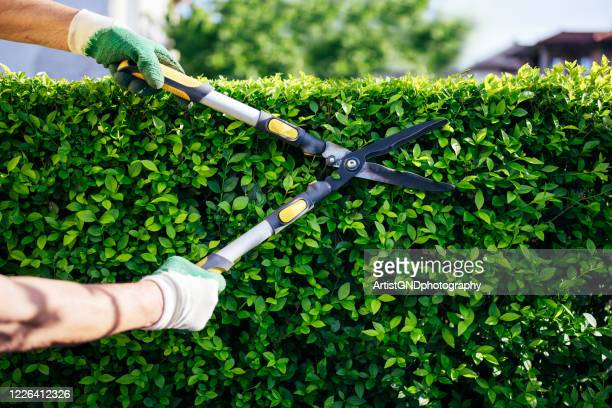 professional gardener trimming hedge in the garden. - hedge stock pictures, royalty-free photos & images