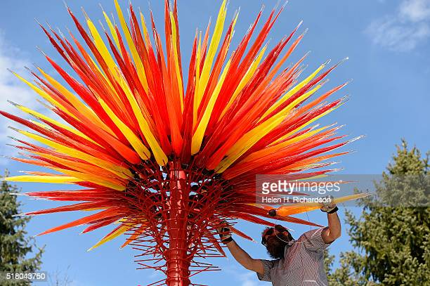 Professional glass installer Alex Scott carefully places glass into the Chihuly glass sculpture entitled Colorado in the Ellipse Garden at the...