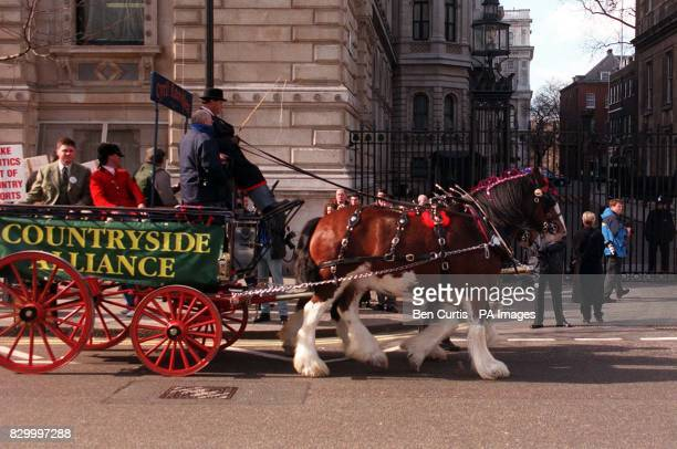 Professional huntsmen and members of the Countryside Alliance deliver a prohunting petition of half a million signatures by Shire horse and cart to...