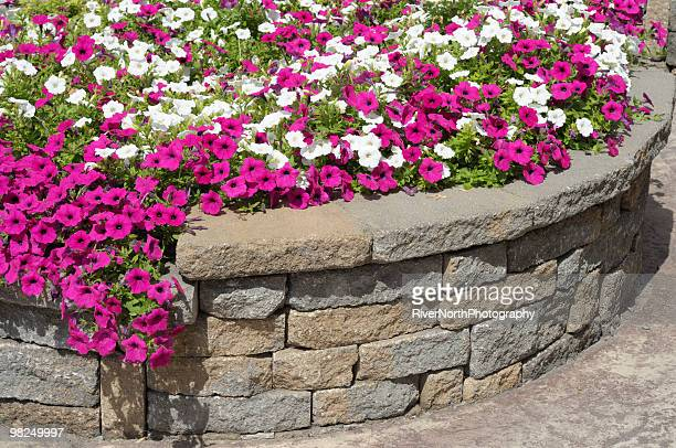 professional landscaping with petunia flower bed - retaining wall stock pictures, royalty-free photos & images